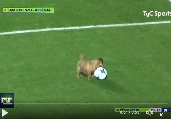 Hund spielt in argentinischer Liga mit + Interview