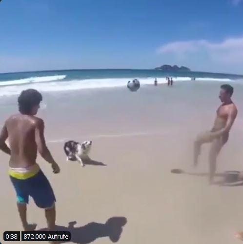 Verpflichtet diesen Hund!