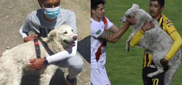 """Fußballmärchen (2): Als der """"Zehner"""" das Platzsturm-Hündchen adoptierte"""