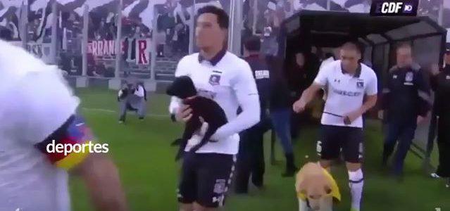 Colo Colo Spieler kommen mit Hunden aus dem Tierheim aufs Feld